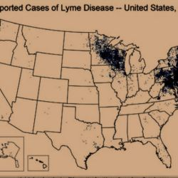 cdc-version-of-extent-oftru-lyme-disease-in-the-usa